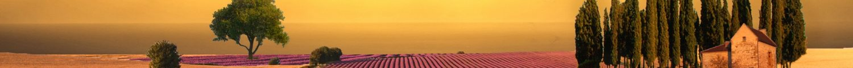 cropped-wallpaper-1d072c.jpg
